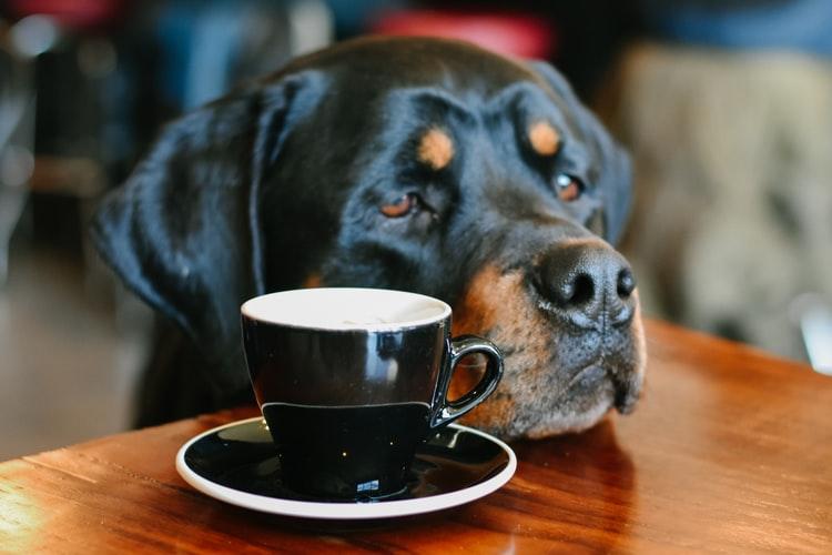 Como atrair mais clientes para o restaurante com o conceito pet friendly